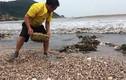 Xem ngư dân Việt khai thác hải sản ngay trên bờ biển