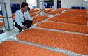 Khám phá những cơ sở sản xuất hải sản khô tại VN