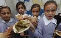 Khác biệt trong bữa trưa của học sinh trên thế giới