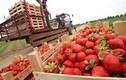 Bên trong nông trang tập thể Liên Xô thời nay