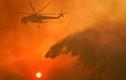 Chùm ảnh cháy rừng kinh hoàng tàn phá khắp thế giới