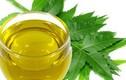 Lợi ích làm đẹp bất ngờ từ tinh dầu lá neem
