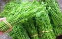Những loại rau rừng khiến bà nội trợ thành thị phát cuồng
