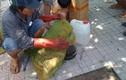 Xem sơ chế ong độc ngay giữa phố ở Đồng Nai