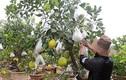 Làng hoa, cây cảnh nhộn nhịp mùa phục vụ Tết