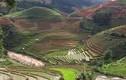 Mù Cang Chải mùa nước đổ: Vẻ tinh tế và hút hồn nhất