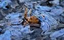 Chùm ảnh động vật hoang dã ấn tượng nhất năm