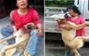 Chó bị cắt đứt cổ, vẫn cố làm điều ai cũng rơi nước mắt