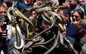 Hãi hùng rắn lúc nhúc quanh người, quấn cổ như trang sức