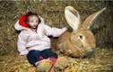 Bé 10 tuổi nhỏ như con thỏ và phép màu có thật