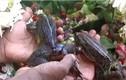 Chuyện lạ hôm nay: Độc đáo tổ chức lễ cưới cho ếch