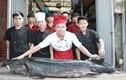 """Cá tầm đen óng, nặng 100kg từ Nga """"bay"""" về Hà Nội"""