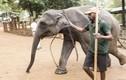 Cảnh hấp dẫn ở trại voi mồ côi lâu đời nhất thế giới