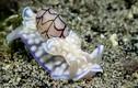 Choáng ngợp hình ảnh ốc biển phù thủy dưới đáy đại dương