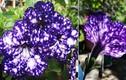 Say đắm loài hoa có vẻ đẹp dựa dải thiên hà