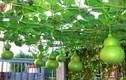 Nhà nào cũng nên trồng 5 loại cây tài lộc đẹp nhà này
