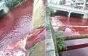 Dòng sông chuyển màu máu đỏ quạch... nguyên nhân ai cũng rùng mình