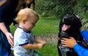 Biết con bị giúp việc bạo hành nhờ ơn... chó cưng bỗng hung dữ