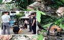 Đang yên đi cưa cây xoài, hai vợ chồng gặp tai nạn thảm khốc