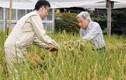 """Nhật hoàng Akihito: """"Gần gũi với dân trong từng nếp nghĩ"""""""