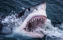 Tiết lộ sốc về loài động vật có nhiều răng nhất