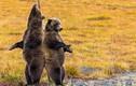 """Siêu yêu cảnh 2 con gấu xám """"múa cột"""" trên đường"""