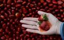 Tác hại của việc ăn quá nhiều dâu tây bạn chưa biết