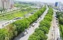 """Chặt hạ 1.000 cây xanh, Hà Nội """"hỏi dân"""", muộn còn hơn không!"""