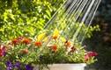 Lỗi sai be bét khiến vườn rau nhà bạn còi cọc, chậm lớn