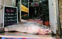 Hình ảnh cá trắm đen khủng 42kg hút khách đại gia Hà Nội