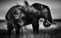 Ảnh đen trắng tuyệt mỹ về thiên nhiên hoang dã châu Phi