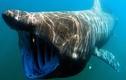 10 loài thủy quái có thân hình dài nhất hành tinh