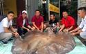"""Sửng sốt """"thủy quái"""" cá đuối nặng 216kg, dài 3,2m ở Việt Nam"""