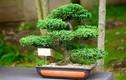 Trồng 6 loại cây này trong nhà sẽ giúp cả nhà luôn vui vẻ