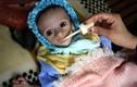 Tháng Ramadan ở Yemen: Nhịn ăn ban ngày, đói khát ban đêm
