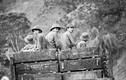 Giải mật Liên Xô giúp Việt Nam ở biên giới phía Bắc