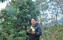 Chuyện huyền bí ở bản Mông cao nhất Việt Nam