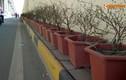 Ảnh: Chậu hoa vỡ nhếch nhác trong hầm chui tiền tỉ ở Hà Nội
