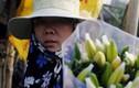 Người trồng hoa ở Hà Nội khóc ròng do ly nở sớm