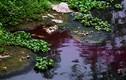 Cảnh hãi hùng dòng sông bị nhuộm đỏ như máu ở Hà Nội