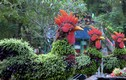 """Ngắm """"siêu phẩm gà lông xanh"""" khổng lồ ở Hà Nội ngày cận Tết"""