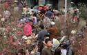 Người Hà Nội chen nhau nghẹt thở ở chợ hoa ngày 29 Tết