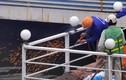 Chùm ảnh: Cưỡng chế tháo dỡ nhà nổi ở hồ Tây