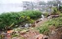 Hồ Tây ngập rác thải sau khi nhà nổi bị cưỡng chế di dời