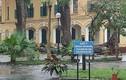 Nhiều học sinh bị cây đổ trúng người giữa sân trường Chu Văn An - HN