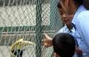 Phản cảm du khách thăm vườn thú vượt rào trêu động vật