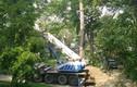 Thực hư cây cổ thụ bị đánh khỏi công viên Bách Thảo – Hà Nội