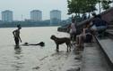 Ảnh: Người Hà Nội đưa chó xuống tắm ở hồ Tây vì nắng nóng