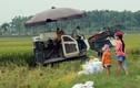 Tết thiếu nhi của những đứa trẻ đi gặt lúa cùng bố mẹ ở Hà Nội