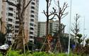Cảnh tượng nhếch nhác trên con đường nghìn tỷ ở Hà Nội